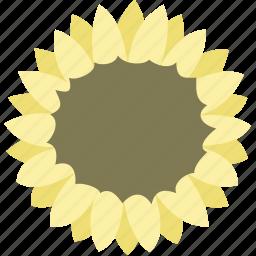 daisy, flower, garden, nature, spring, sunflower icon
