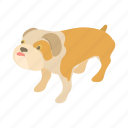 animal, bulldog, cartoon, english, graphic, pet, puppy icon