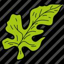 eco, ecological, foliage, leaf, lobate, nature icon