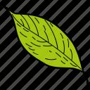 eco, ecological, foliage, leaf, nature, sallow leaf icon