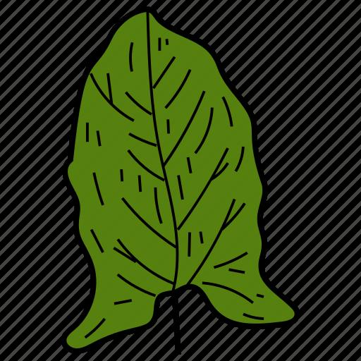 eco, ecological, foliage, hastate leaf, leaf, nature icon
