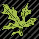 coriander leaf, eco, ecological, foliage, leaf, nature icon