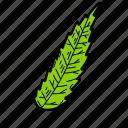 cedar leaf, eco, ecological, foliage, leaf, nature icon