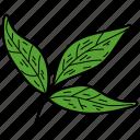 eco, ecological, foliage, leaf, nature, tripartite leaf icon