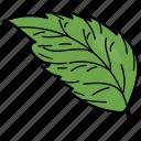 eco, ecological, elm leaf, foliage, leaf, nature icon