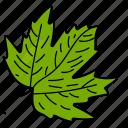 eco, ecological, foliage, leaf, maple leaf, nature icon