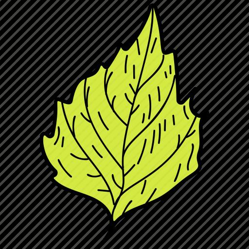 crenate leaf, eco, ecological, foliage, leaf, nature icon