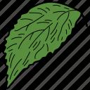 eco, ecological, foliage, leaf, nature, serrated leaf icon