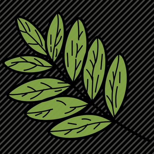 eco, ecological, foliage, leaf, nature, pinnatisect leaf icon