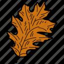 eco, ecological, foliage, leaf, nature, oak leaf icon