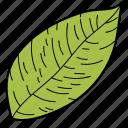 eco, ecological, foliage, leaf, nature, scalloped leaf icon