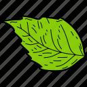 basil leaf, eco, ecological, foliage, leaf, nature icon