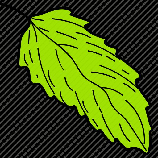 eco, ecological, foliage, green leaf, leaf, nature icon