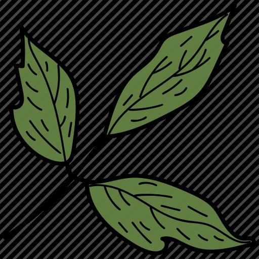 box elder leaf, eco, ecological, foliage, leaf, nature icon
