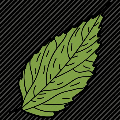 birch leaf, eco, ecological, foliage, leaf, nature icon