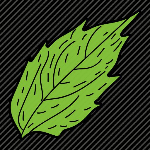 alder leaf, eco, ecological, foliage, leaf, nature icon