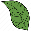 eco, ecological, foliage, leaf, nature, ovate leaf icon