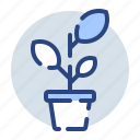 growth, leaf, leaves, plant, pot, ecology, environment