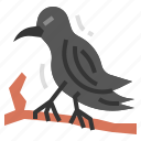 raven, bird, animal, wildlife, aves, crow, halloween