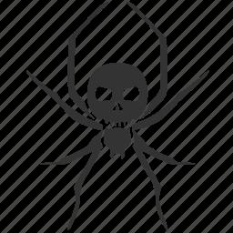 deadly spider, death, halloween, poison, poison spider, poisonous spider, spider icon