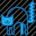 animal, cat, fear, halloween, night icon