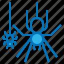 animal, halloween, haunted, spider, web icon