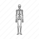 bones, human anatomy, skeleton, skull icon