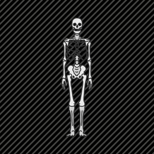 Bones, human anatomy, skeleton, skull icon - Download on Iconfinder