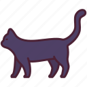 animal, cat, halloween, kitten, pet, spooky, witch icon