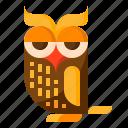 animal, halloween, night, owl, poultry
