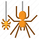 animal, halloween, haunted, spider, web icon