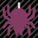 halloween, insect, spider, spiders, tarantula