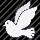 dove, love, love dove, peace, pigeon, valentine, valentine's day