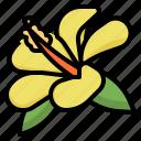 flower, hawaii, hibiscus, plant
