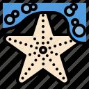 hawaii, life, star, starfish