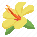 hawaii, hibiscus, flower, plant