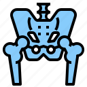 anatomy, hip, joint, pelvis, skeleton icon