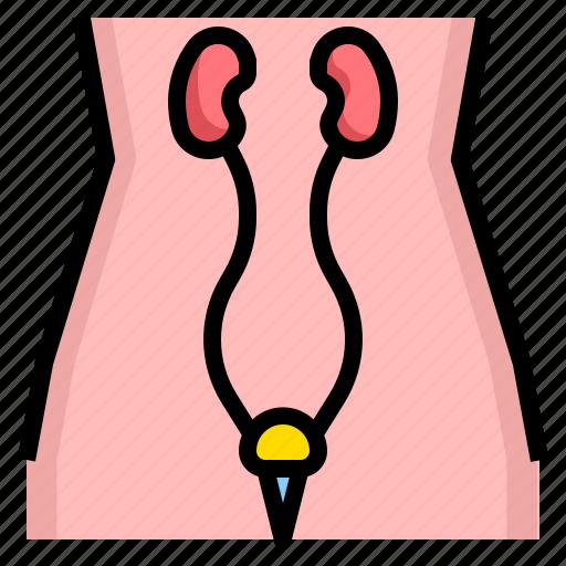 Care, health, medical, medicine, urology icon - Download on Iconfinder
