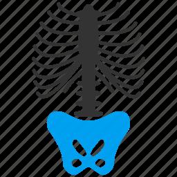 anatomy, backbone, body, organ, ribs, skeleton, spine icon