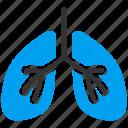 lungs, anatomy, body, breath system, breathe, lung, respiratory