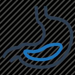 gastroenterology, stomach icon