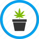 cannabis, hemp, herb, illegal plant, leaf, marijuana, pot icon