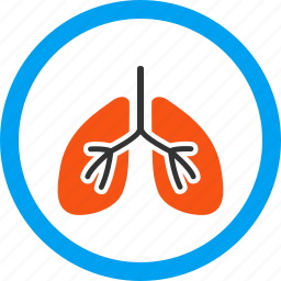 anatomy, body, breath system, breathe, lung, patient lungs, respiratory icon