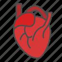 anatomy, health, heart, lover, medical
