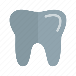 anatomy, biology, dental, dentist, oral, teeth, tooth icon