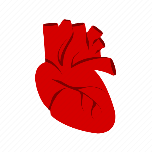 artery, body, cardiology, heart, human, medical, organ icon