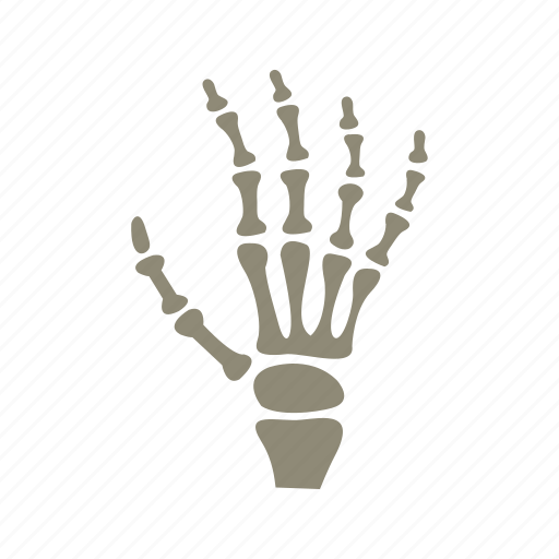 bones, examination, fingers, hand x-ray, image, radiology, skeleton icon