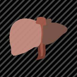 anatomy, biolodgy, health, human body, liver, medical, organ icon