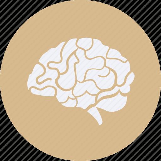 brain, drug, health, healthcare, hospital, medical icon