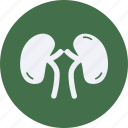 drug, health, healthcare, hospital, kidneys, medical icon